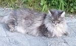 Katze wartet auf Maus