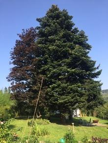 Gesunder Baum als Symbol für gesunden Egoismus