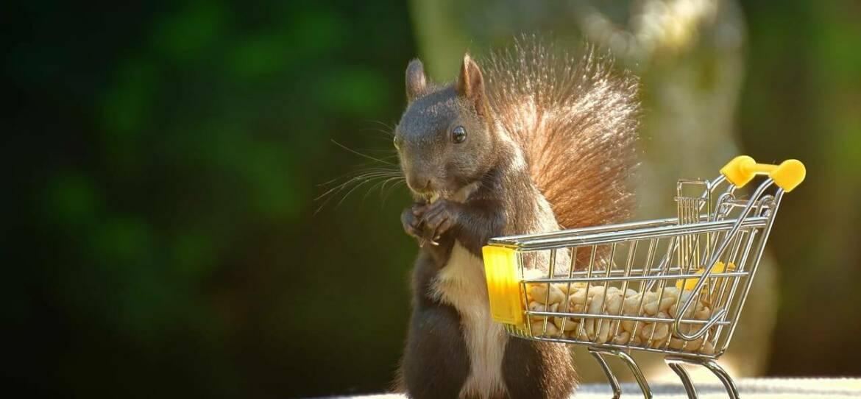 squirrel-g9ace5f2c5_1280-e1633084380586.jpg